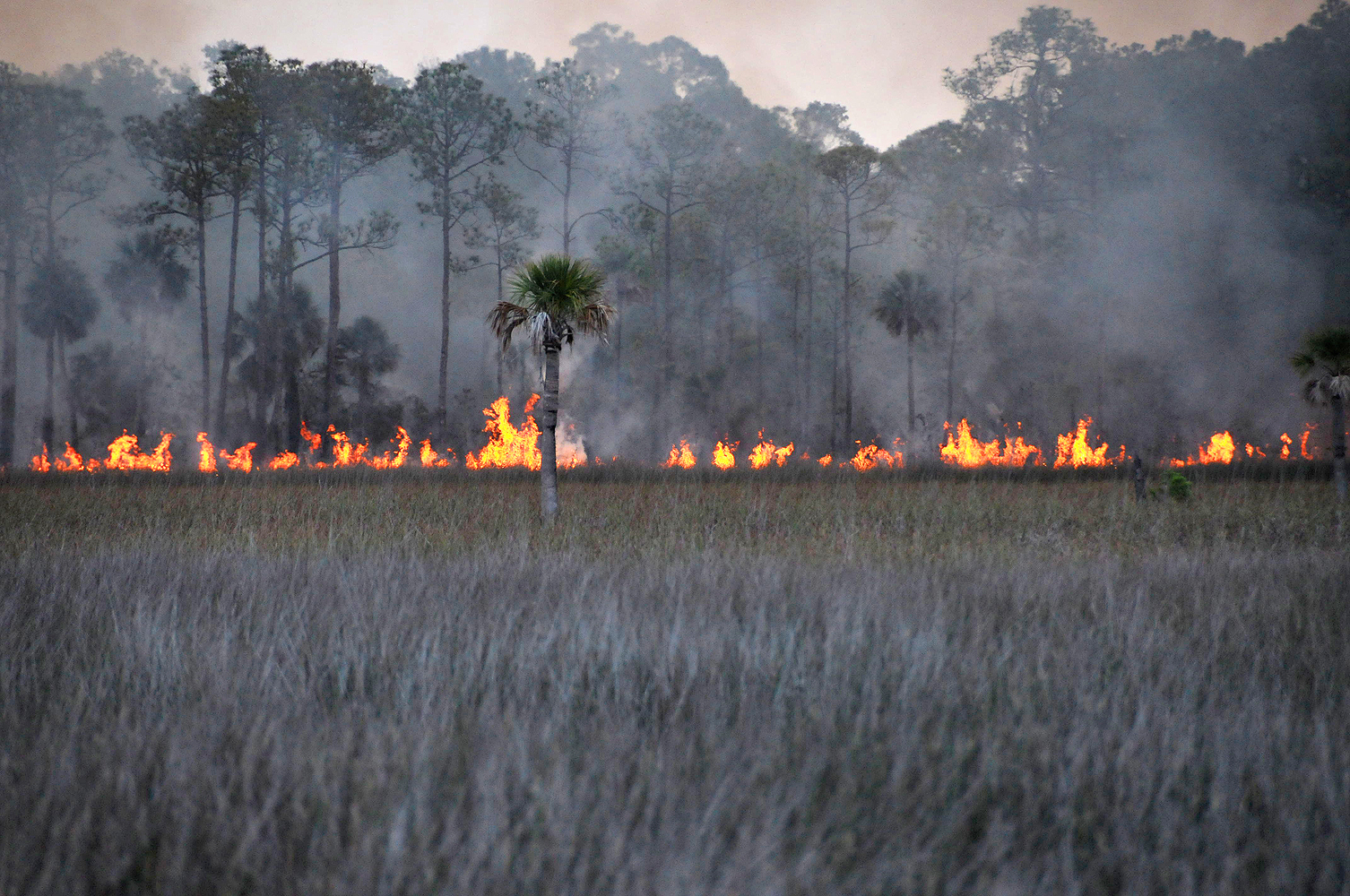florida forest fire 1000