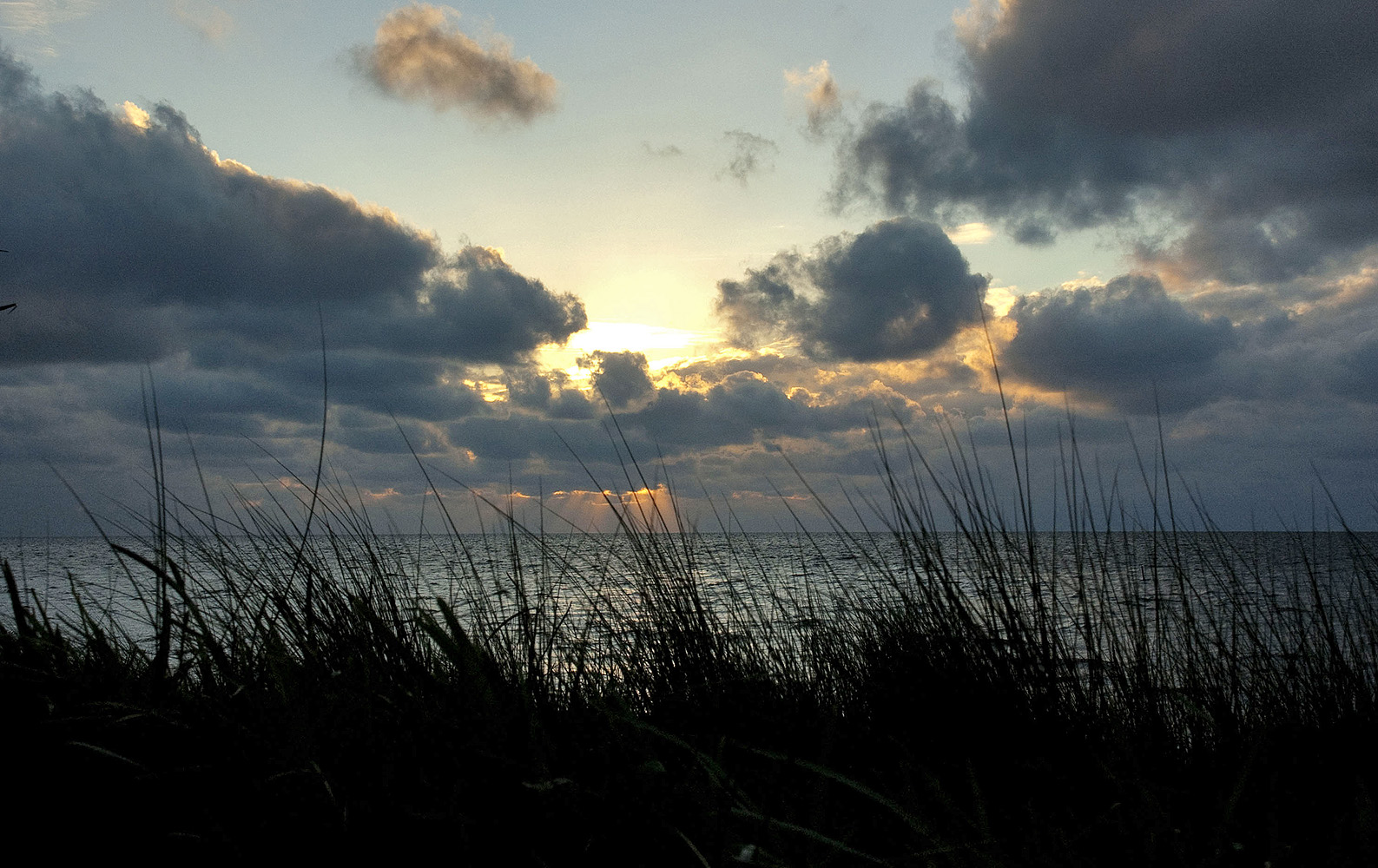 florida gulf coast sunset in grass 1000
